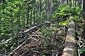NPR Boubínský prales 20120910 10.jpg
