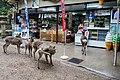 Nara (25840061466).jpg