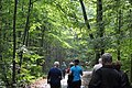 Nationalpark Hainich (2).jpg