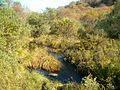 Natural woodland in Gleann Sabhail - geograph.org.uk - 260468.jpg