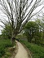 Nature Trail Tree - geograph.org.uk - 424137.jpg
