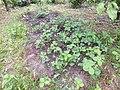 Nature of Latvia DSCF3406 - Flickr - davispuh.jpg