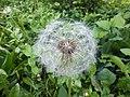 Nature of Latvia DSCF3414 - Flickr - davispuh.jpg