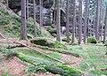 Nature reserve Pavlinino udoli (008).jpg