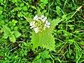 Natureflower.jpg