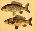 Naturgeschichte in Bildern mit erläuterndem Text (Taf. CXXXIV) (6058682457).jpg