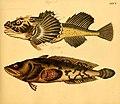 Naturgeschichte in Bildern mit erläuterndem Text (Taf. XXXV) (6058661581).jpg