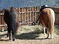 Naturlandia (Andorra) 08 Ponis.JPG