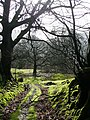 Near Pen-y-Pant - geograph.org.uk - 653095.jpg