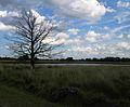 Netherlands Grote Peel dead tree.jpg