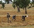 Nigerian farmers.jpg