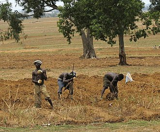 Economy of Nigeria - Image: Nigerian farmers