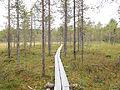Nyrölä nature trail - duckboards.jpg
