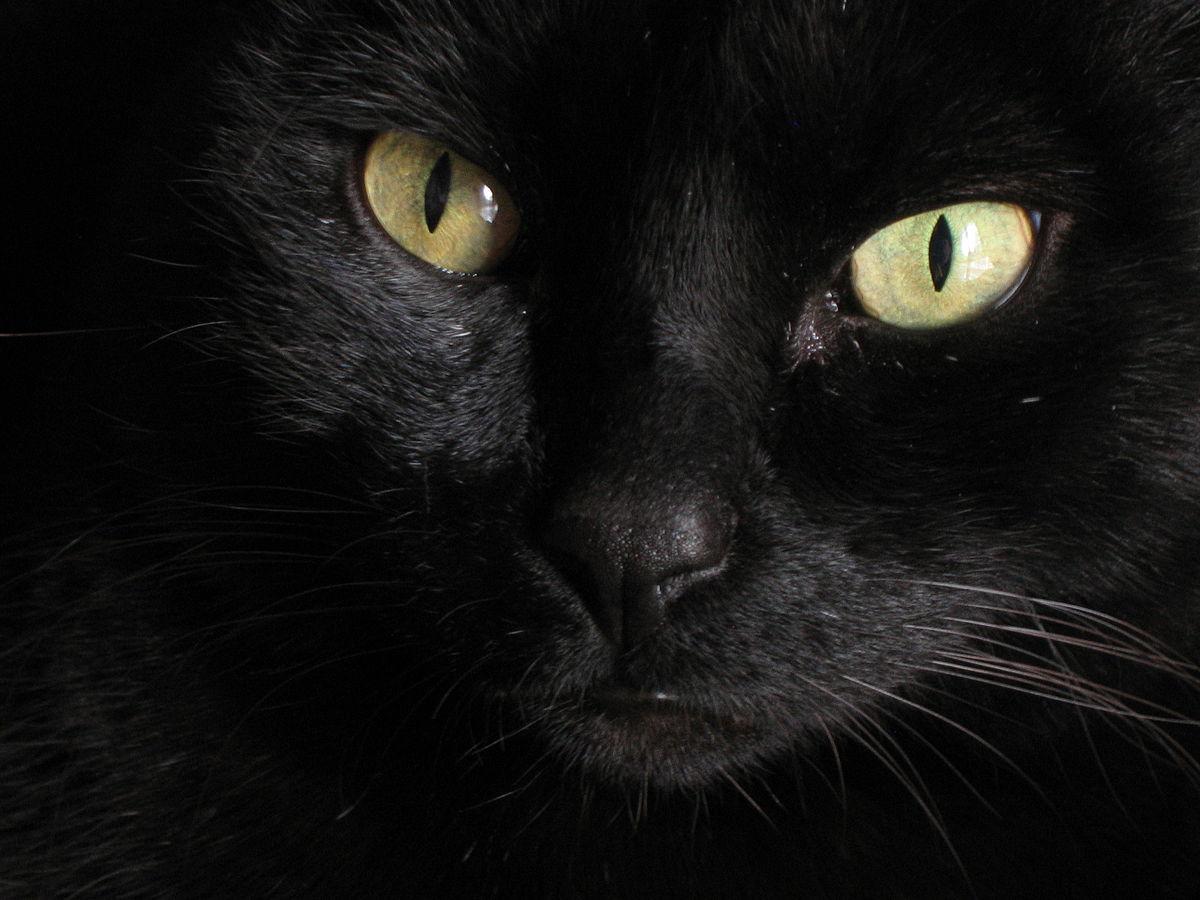 Cats (musical) - Wikiquote