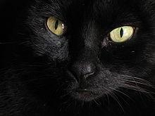 Afbeeldingsresultaten voor zwarte kat
