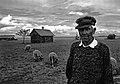 Old Man's Sheep.jpg