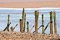 On Carsethorn Beach - geograph.org.uk - 689430.jpg