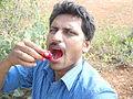 Opuntia ficus-indica fruit (11).JPG