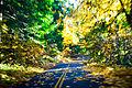 Oregon Route 242.jpg