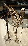 Ornithomimus sp 2 salt lake city.jpg