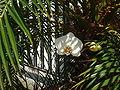 Orquidea3 Salete.jpg