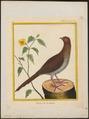 Ortalida motmot - 1700-1880 - Print - Iconographia Zoologica - Special Collections University of Amsterdam - UBA01 IZ16900093.tif