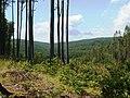 Osvětimany, krajina severně od obce.jpg