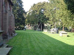 Overton-on-Dee - The yew trees within the churchyard