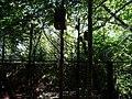 Paignton , Paignton Zoo, Enclosures - geograph.org.uk - 1483280.jpg