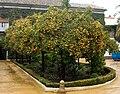 Palacio de las Dueñas 003.jpg