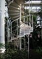 Palm House (Schönbrunn) spiral stair w Jasminum azoricum climbing 20080210.jpg