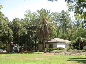 Mizra - Image: Palm tree in Mizra
