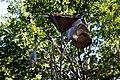 Papaveri alti alti (Rignano sull'Arno) 03.jpg