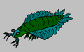 Parapeytoiaimagewiki.png