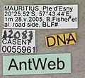 Paratrechina longicornis casent0055961 label 1.jpg