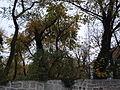 Paris 75018 Rue Norvins Wall enclosing the Montmartre shrubland.jpg