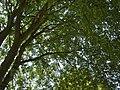 Park of Versailles, 2005 (30424961) Jardin du Roi.jpg