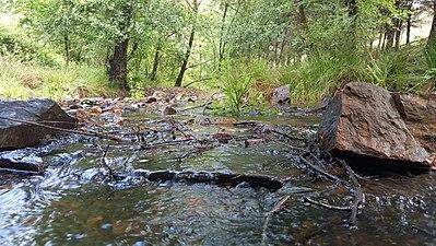 Parque natural Despeñaperros arroyo.jpg
