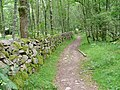 Path Alongside Wall, Scolty Forest - geograph.org.uk - 32592.jpg