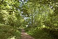 Path through Caer Wood climbing the Skirrid - geograph.org.uk - 767201.jpg