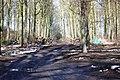 Path through Horse Parks Wood - geograph.org.uk - 1717509.jpg