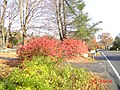 Patterson, NY, USA - panoramio.jpg