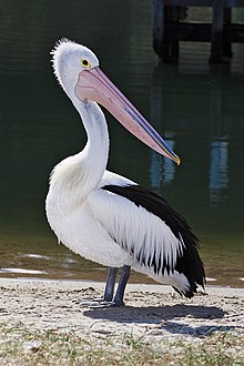 Pelican lakes entrance02.jpg