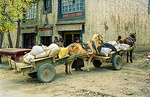 Tibetan cuisine - Shipment of barley grain, a food staple in Tibet. It is roasted and ground into powder to make a flour