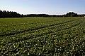 Peltomaisemaa Leppävaarasta - panoramio.jpg