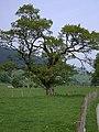 Pentre Cilcwm in Cwm Twymyn - geograph.org.uk - 809554.jpg