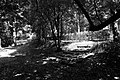 Pescia, villa la guardatoia, bosco all'inglese 02.jpg
