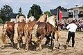 Pferdesportveranstaltung in Seifersdorf (Jahnsdorf)..2H1A8657WI.jpg