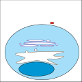 Phagocytosis cartoon 01.svg