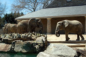 Philadelphia Zoo - The elephants at the Philadelphia Zoo have been phased out. In July 2009, the last two elephants, both African, departed to a sanctuary.